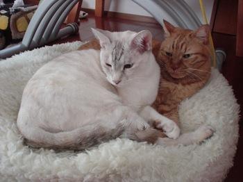 2012Oct27-Ram&Sunny5.jpg