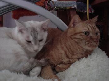 2012Oct28-Ram&Sunny1.jpg