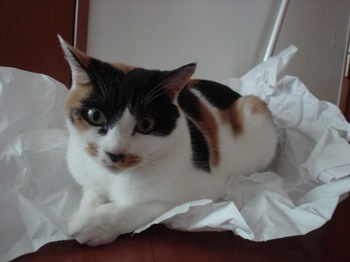 2012Oct29-Donna2.jpg