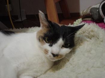 2012Oct31-Donna2.jpg