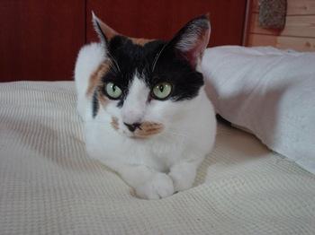 2012Sep22-Donna2.jpg