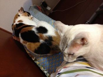 2012Sep23-Donna&Sunny.jpg