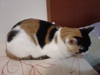 2012Sep24-Donna1.jpg