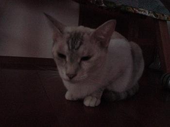 2012Sep25-Sunny4.jpg