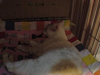 2012Sep30-Sunny8.jpg