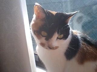 2012jan28-Donna3.jpg