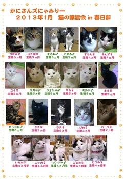 2013年1月かにさんズにゃみりー譲渡会in春日部_参加猫.jpg